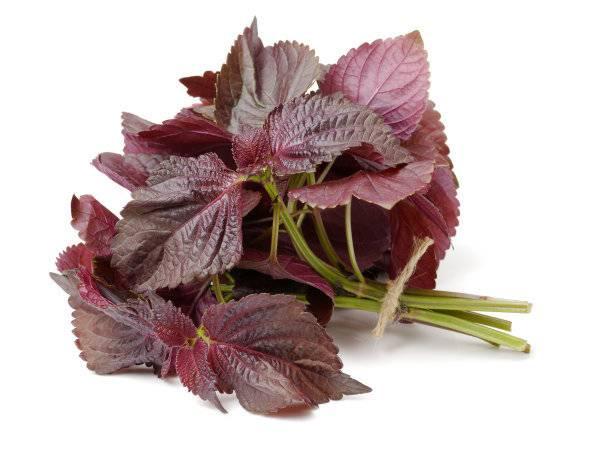 紫苏叶精油进口清关需要的相关材料一解答