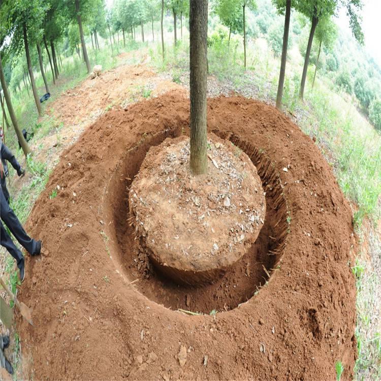 小型手提挖树机 可以挖土球的挖树机