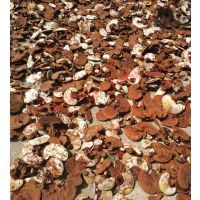 河南靈芝種植技術培訓 優質南韓靈芝種植基地
