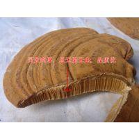 河北省灵芝盆景日常保养 野生灵芝批发厂家