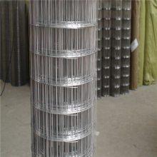 电焊网片现货 镀锌电焊网 毛片网