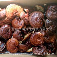 椴木栽培 泰山赤靈芝 韓芝 菌蓋厚 靈芝片 赤芝 品相好 出口品質