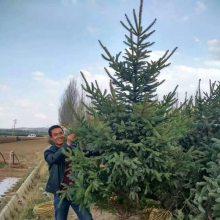 定西綠森苗木種植農民專業合作社