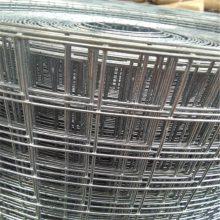 抹墙电焊网 热镀锌电焊网 1米宽铁丝网