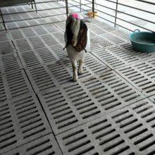 三十斤左右的白山羊价格报价一斤价格报价现货价格