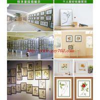 广之应 植物标本展示框 40*30cm腊叶标本