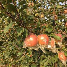 陕西富平脆甜多汁红富士苹果特价时令水果5斤一件代发