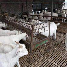 肉羊价格报价斤养殖成本现货供应