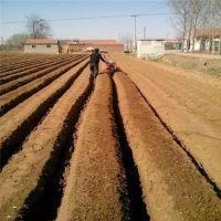 蔬菜大棚松土旋耕机 金佳大葱开沟起垄封沟机 农用自走式旋耕起垄机
