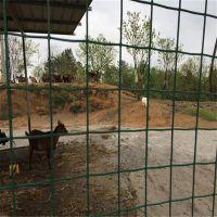 养殖荷兰网 养鸡护栏网 公路防护网