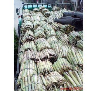 供应供应甘蔗种 黄皮果蔗种苗 ***高产甘蔗种 水果甘蔗种