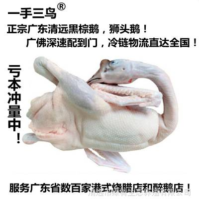广东黑棕鹅棚鹅狮头鹅港式烧鹅醉鹅原材冰鲜鹅新鲜光鹅全国可发货