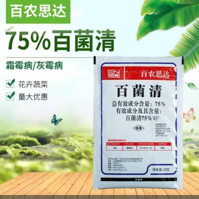 百农思达-75%百菌清蓝粉 霜霉病锈病白粉病炭疽病叶斑病