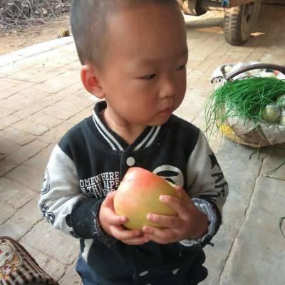 新果陕西富平非延安洛川丑苹果水果红富士当季新鲜包邮整箱批发送礼盒