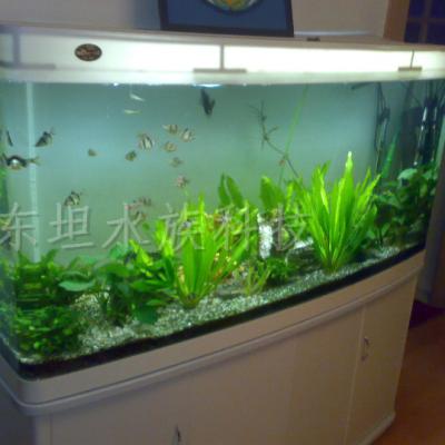 广州龙鱼缸品牌,广州鱼缸图片,广州龙鱼缸