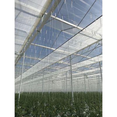 温室西红柿吊蔓挂钩使用方法