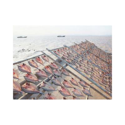 海极尊冻鲜黄鱼 欢迎来电 台州广源渔业供应